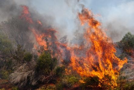 'Bush fire' by Nicolas Emmanuel-Emile